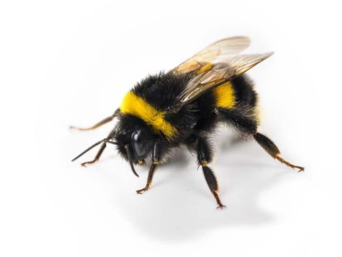 duurzaamheid doelen bumbal met uitzetten bijen
